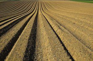 רכישת קרקע – פוטנציאל כלכלי עצום