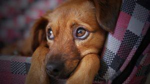 מה לעשות במידה והכלבה מסרבת לטייל עם רתמה?