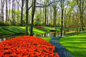 יער בהולנד