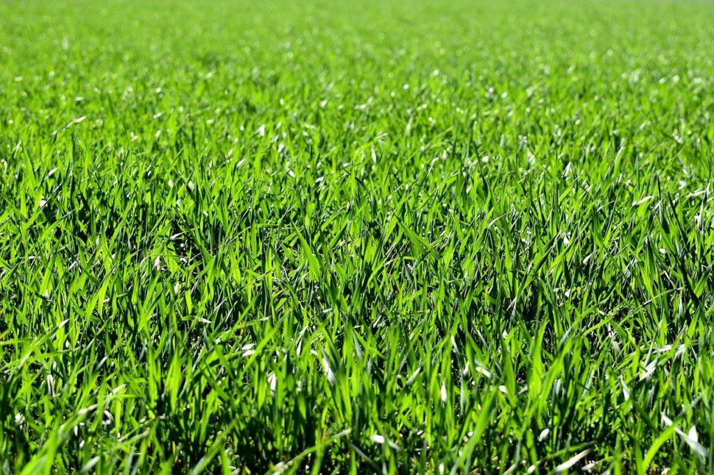 משטח ירוק